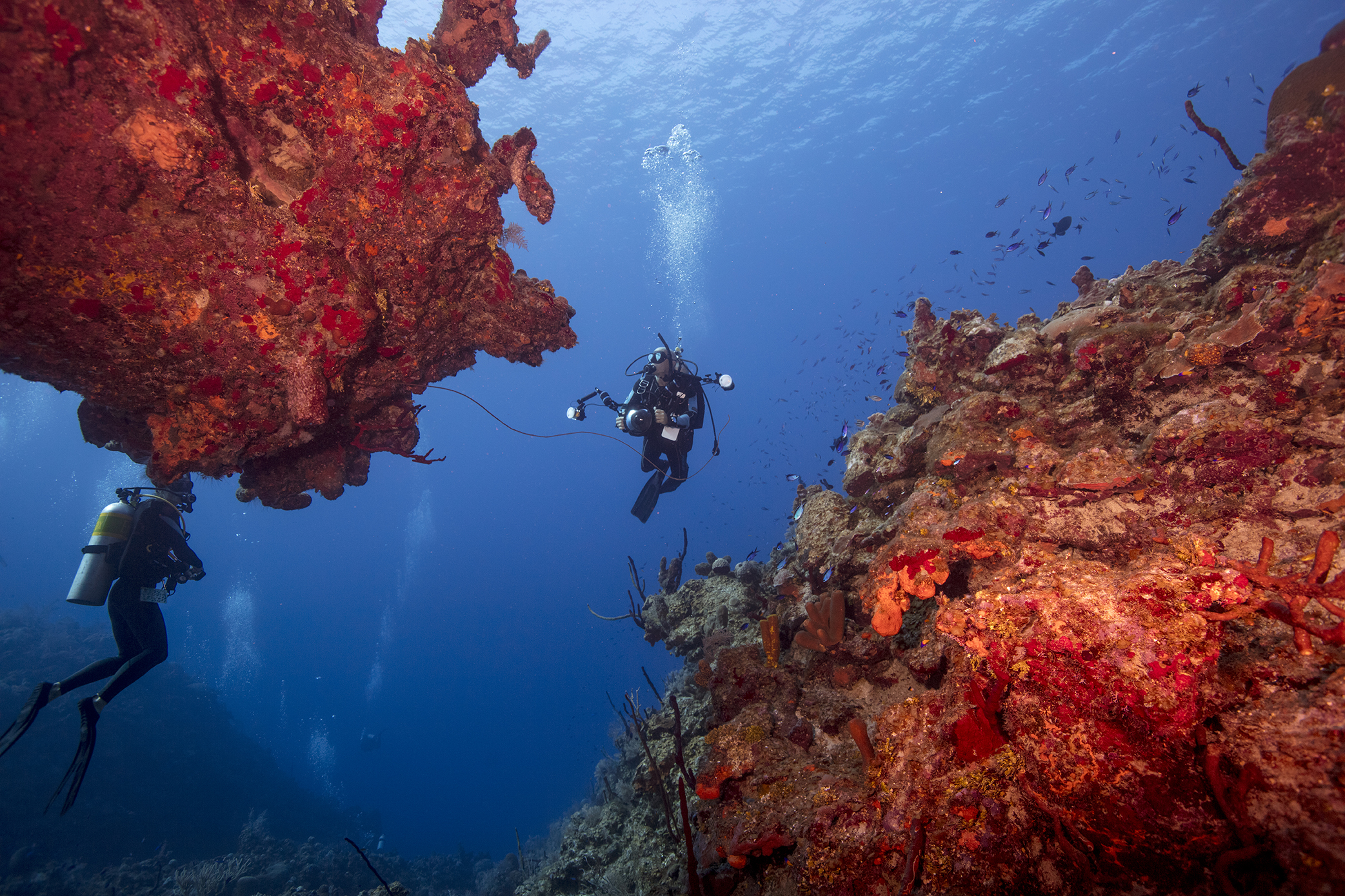 Dive Destination: Grand Cayman