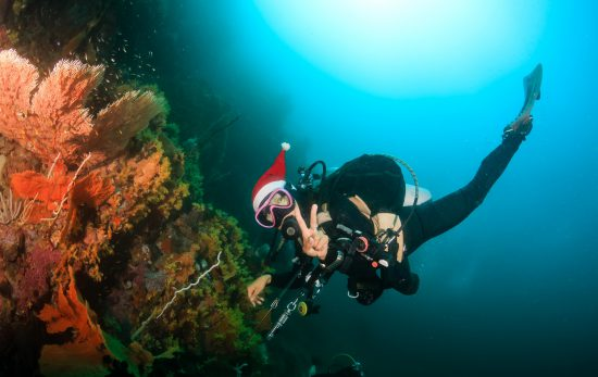 Holiday Diver Shutterstock