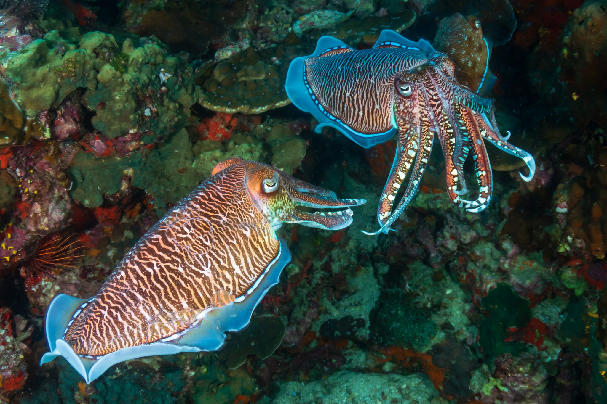 Cuttlefish Displays Shutterstock