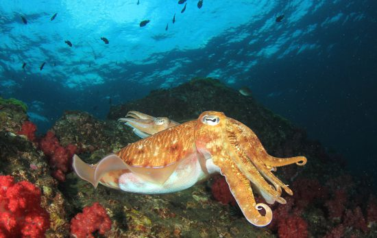 Discover the Incredible Marine Life in South Australia