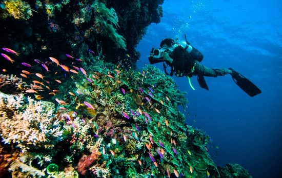 Lombok- Indonesia - Scuba Diving - Ocean - Reef - Marine Life- Underwater