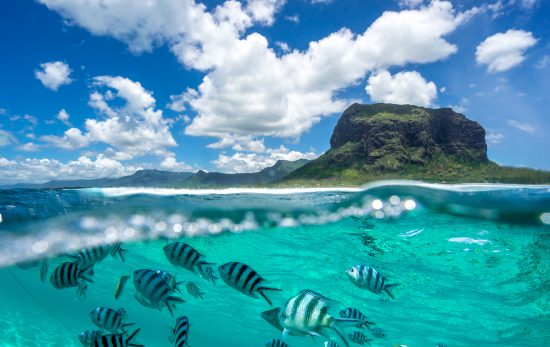 Top Dive Sites in Mauritius Header