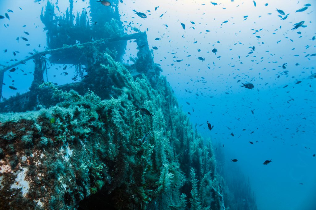 Best freediving spots for wrecks - HMS Maori