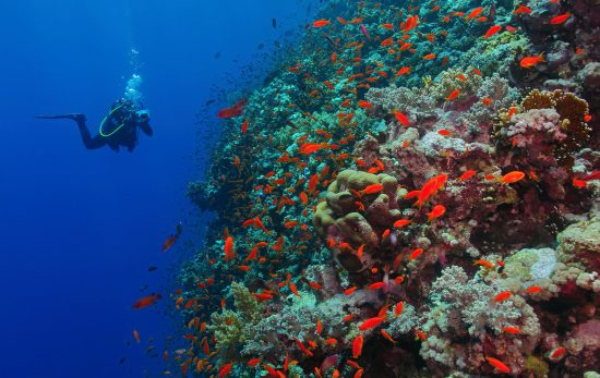 Top Dive sites in Egypt