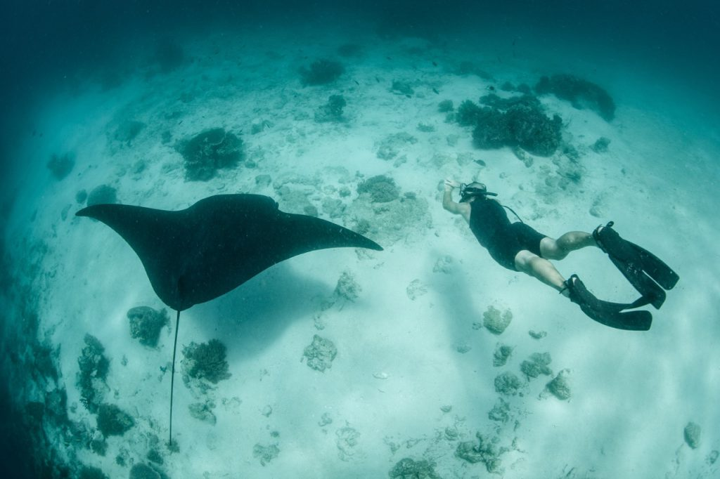 best places to dive with manta rays raja ampat