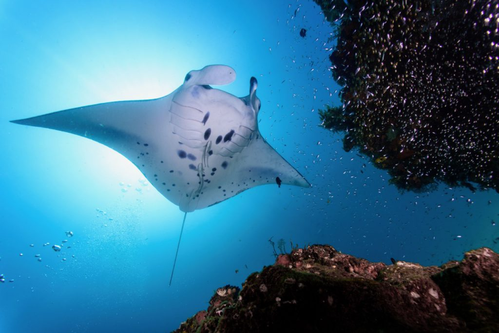 best places to dive with manta rays
