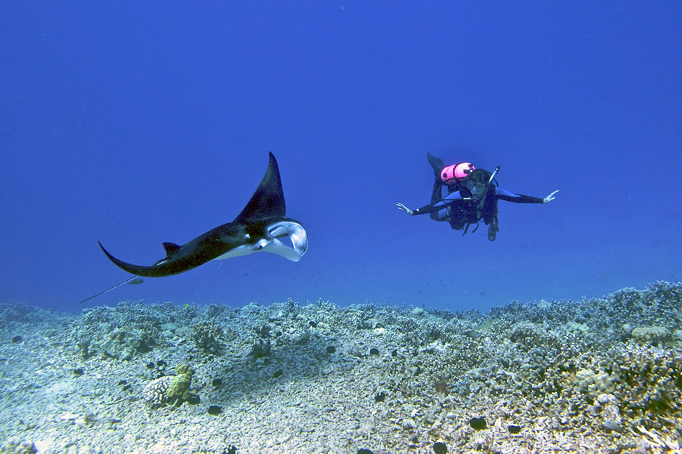 best places to dive with manta rays hawaii