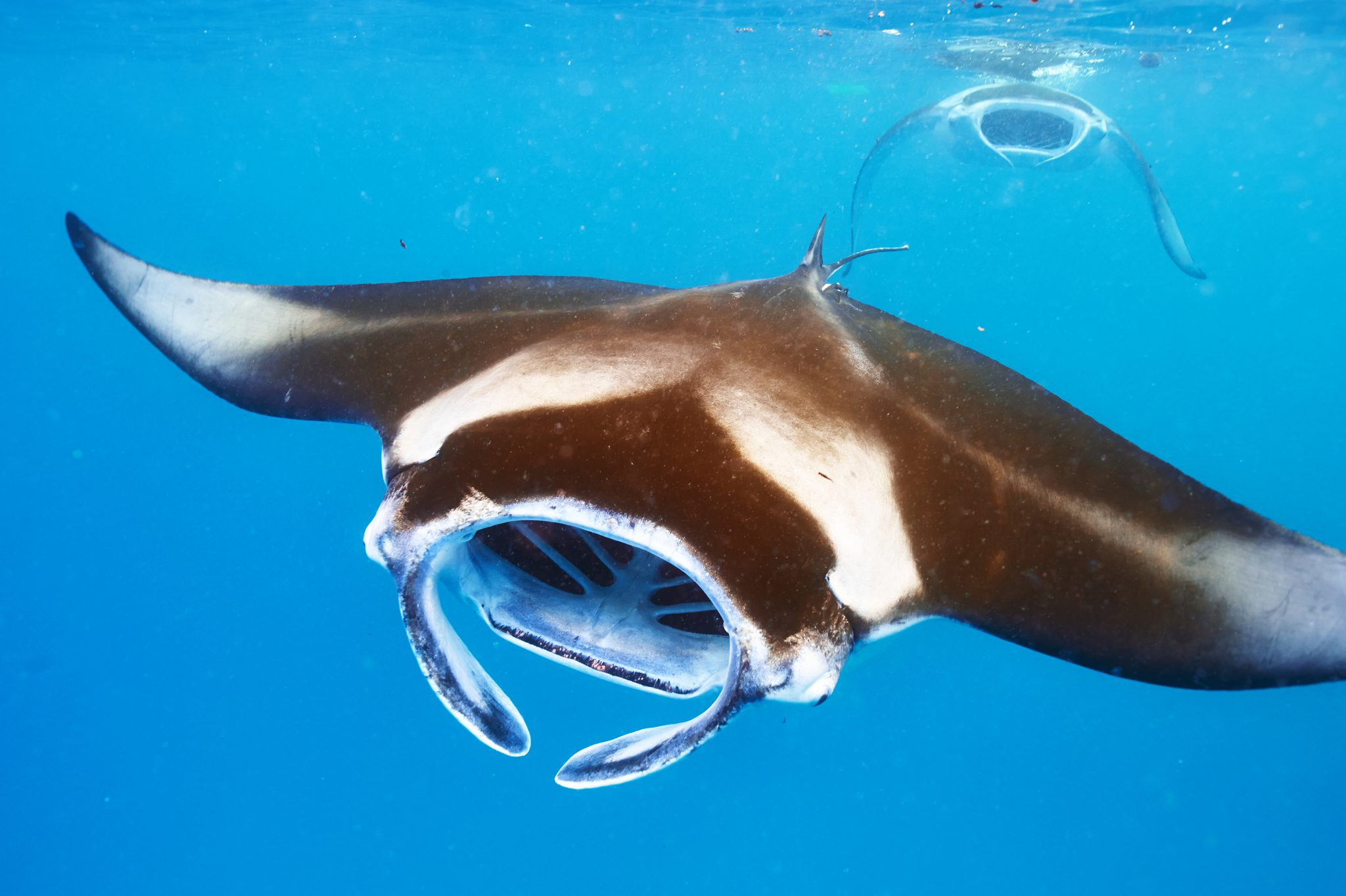 best places to dive with manta rays coral bay