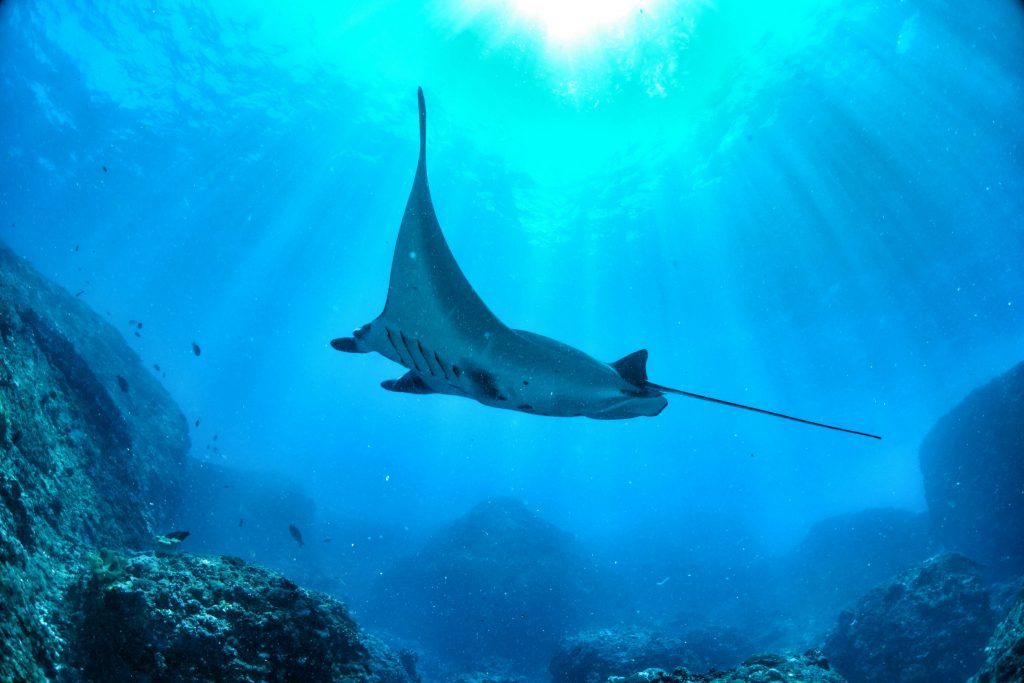 best places to dive with manta rays palau