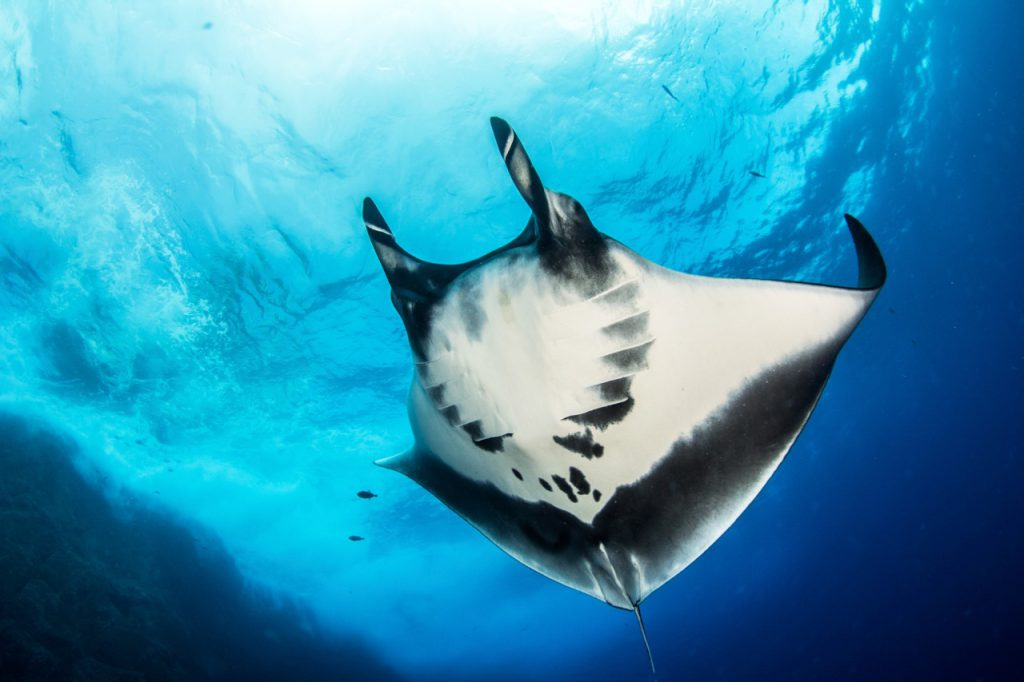 dive with mantas in Socorro