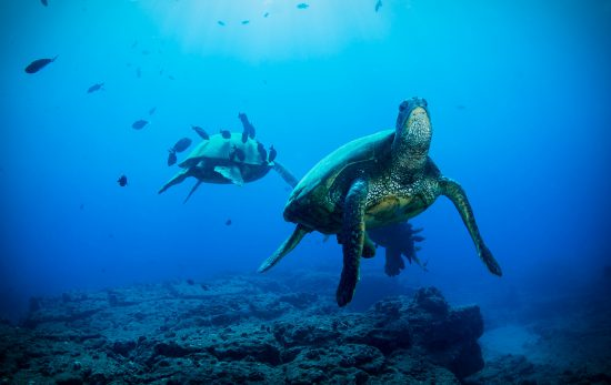 SeaTurtles_Deep_Shutterstock