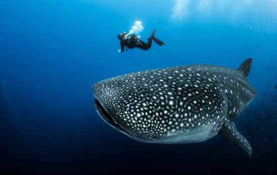 diving with endangered species