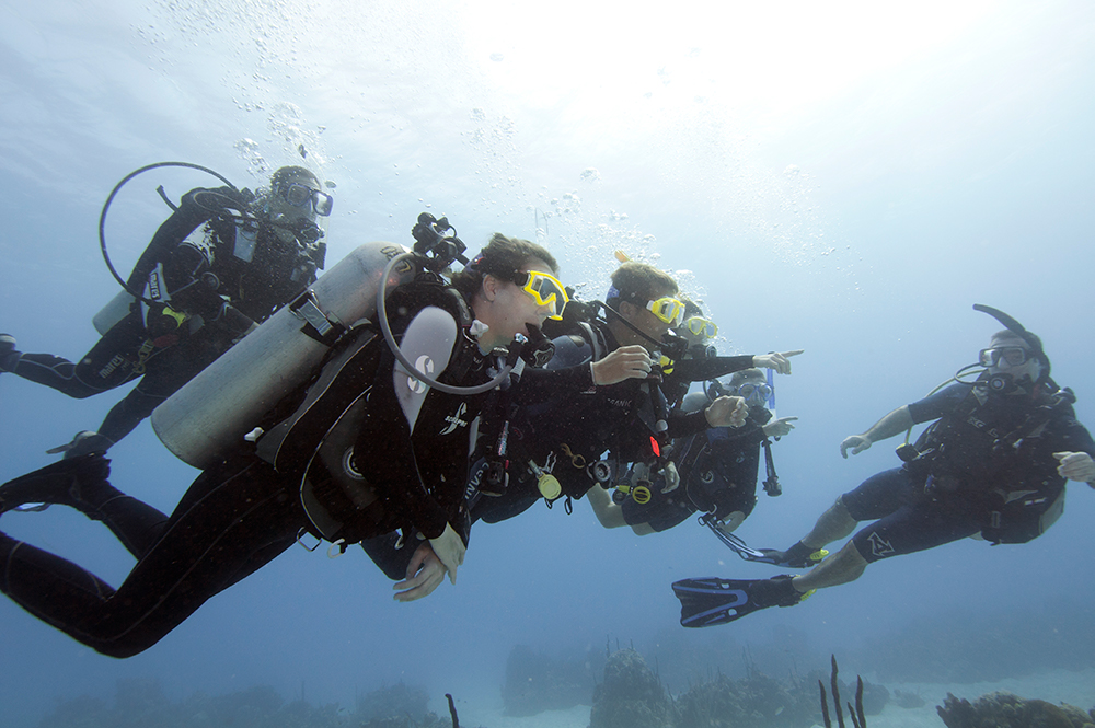 Group Dive - Scuba Divers - PADI