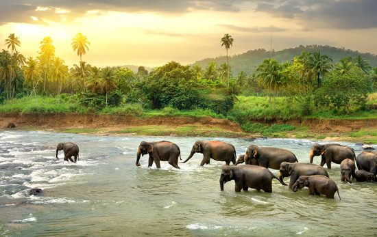 Sri Lanka - Elephants - River
