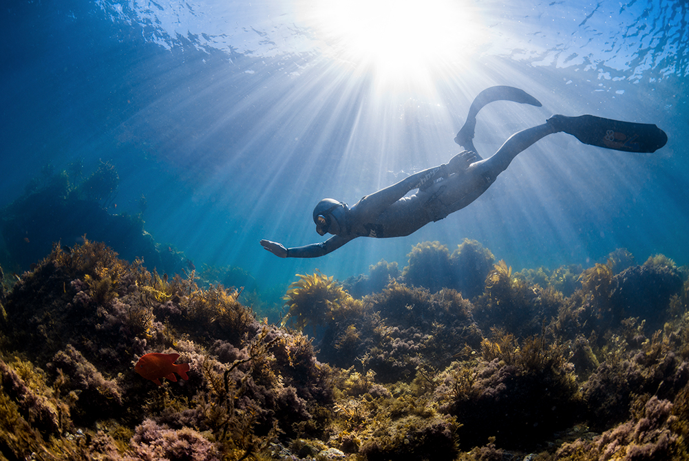 PADI Freediver - Open Water Freedive