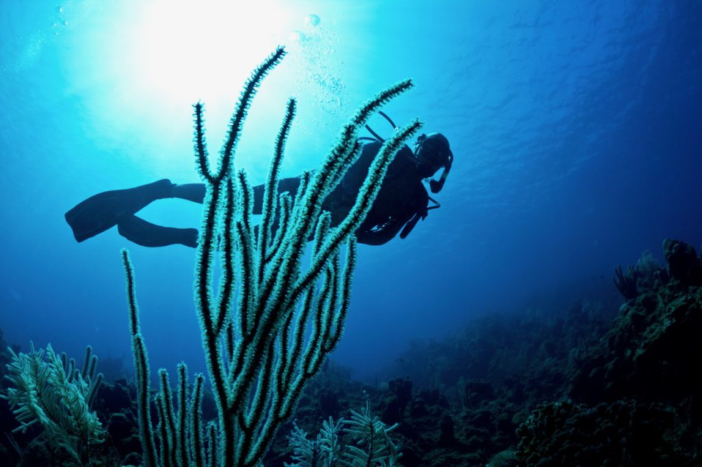 christmas new year scuba diving destinations