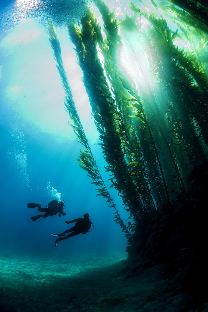 Kelp Forest - Underwater - Scuba Divers - California