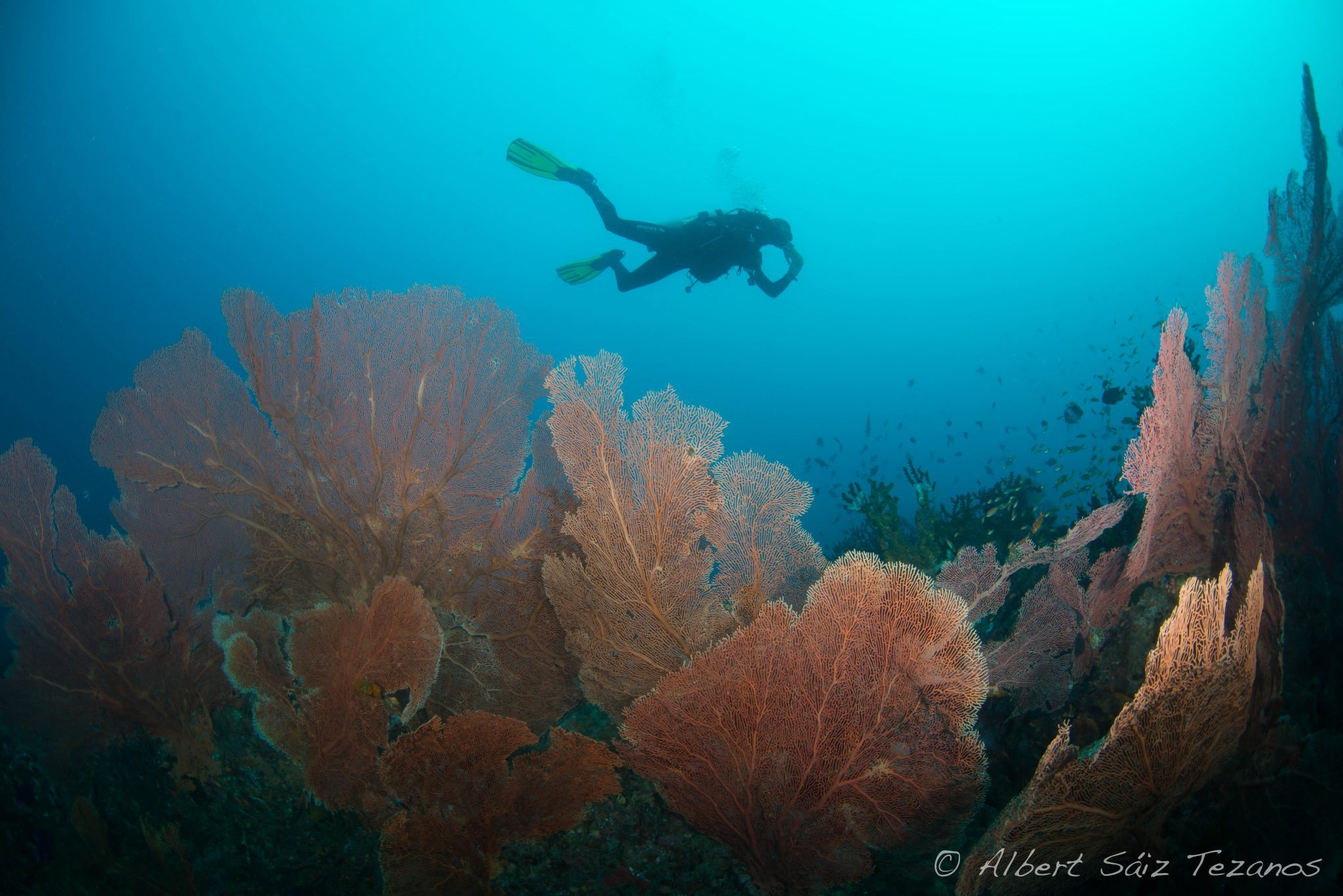 Sumatra - Indonesia - scuba diving - underwater