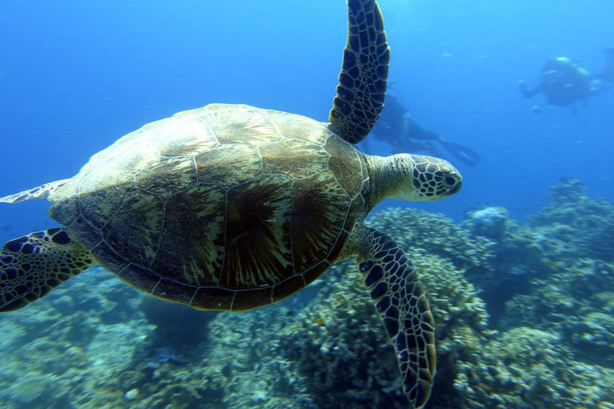 Isolation in Paradise - Philippines - underwater - turtle