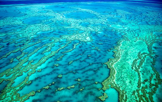 Great Barrier Reef - Australia - Queensland - Coral Reef
