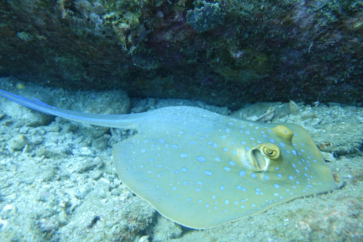 Isolation in Paradise - Philippines - underwater - stingray