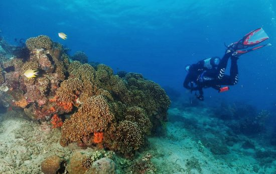 Java - Indonesia - Underwater - Coral - Reef - Scuba Diving