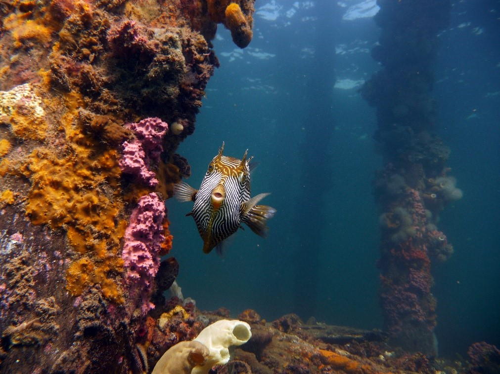 South Australia - fish - Underwater