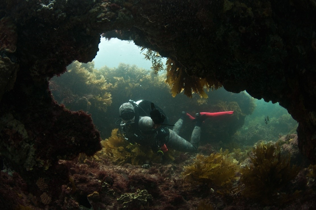 South Australia - the bluff - Underwater
